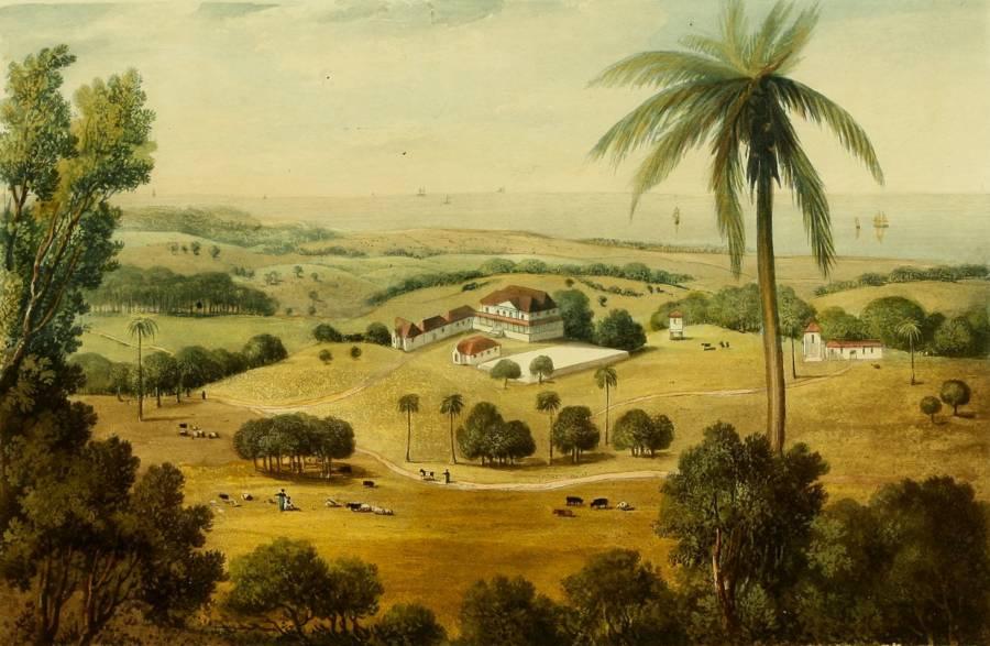 Jamaica Plantation