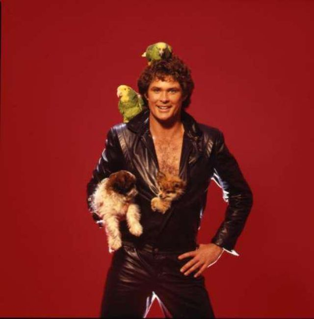 Just David Hasselhoff With Some Puppies Vintage News Daily