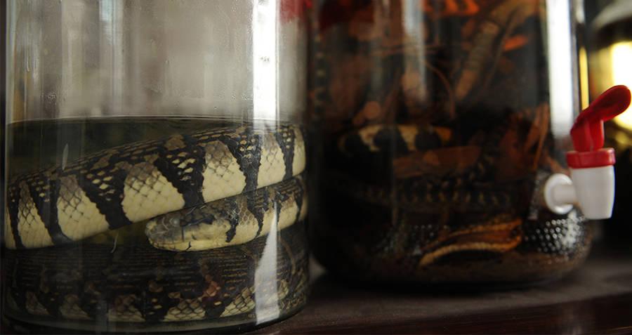 Snake Wine Spigot
