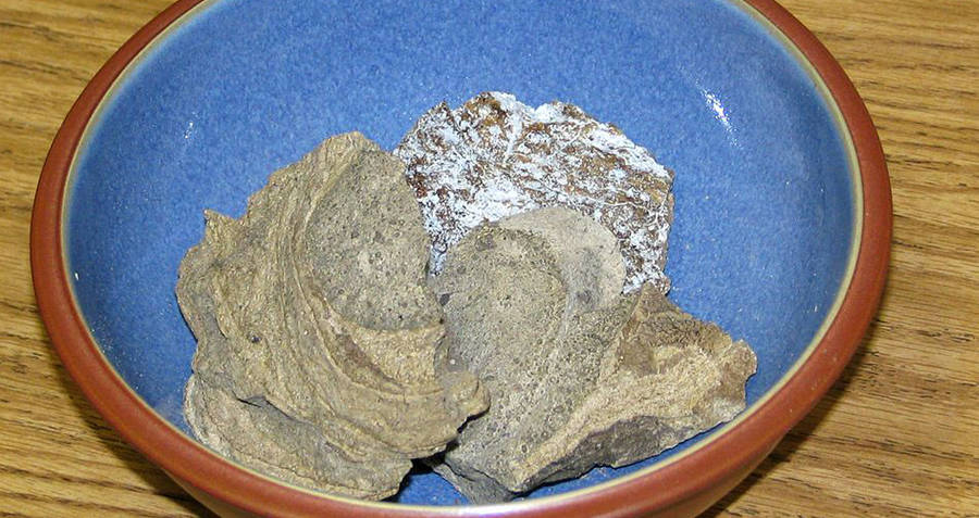 Ambergris In A Bowl