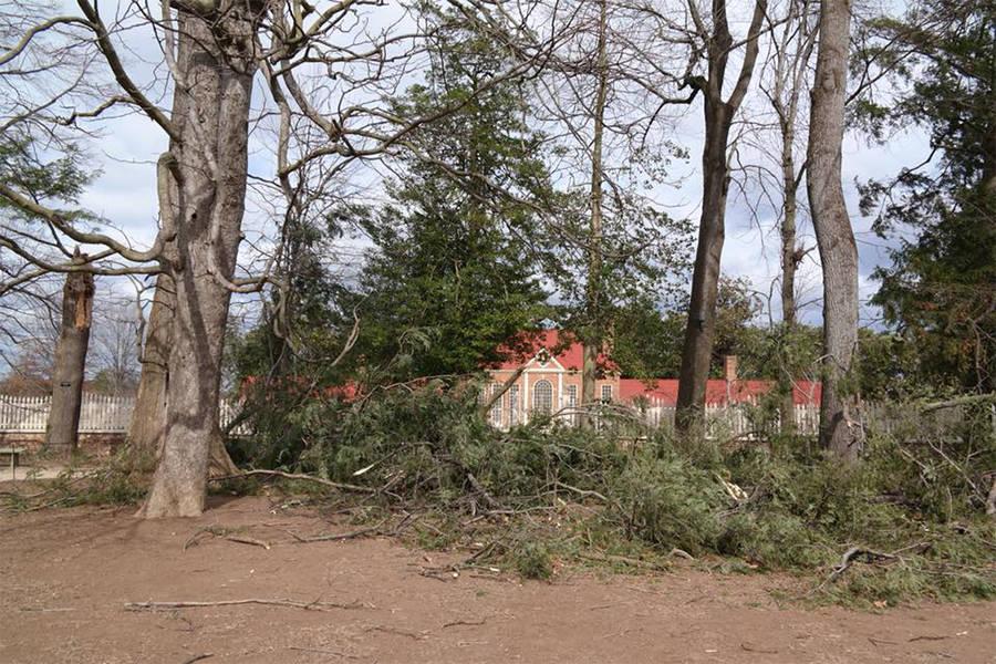 Fallen Hemlock Mount Vernon